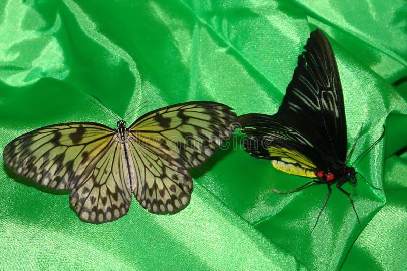 Vlinders op een groene achtergrond stock afbeeldingen