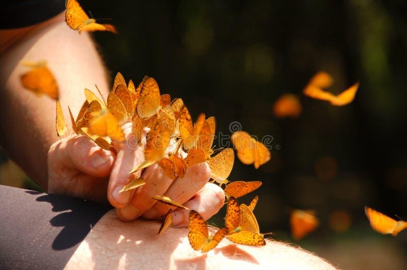 Vlinders op hand stock afbeeldingen