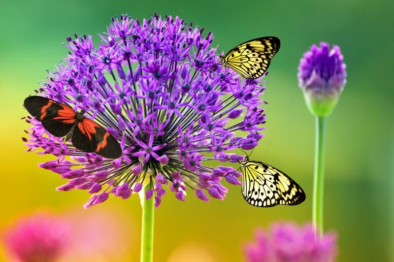 Vlinders op kleurrijke bloem stock afbeelding