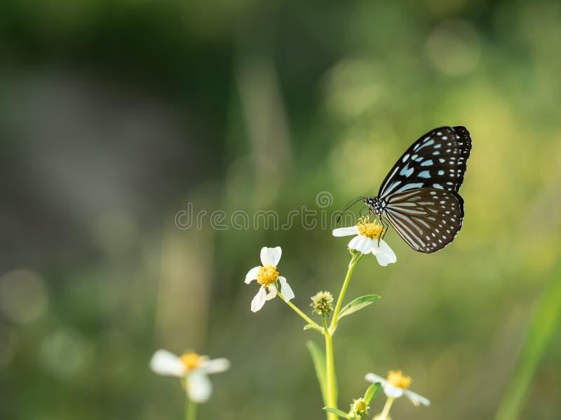 Vlinders op verse groene grasgebieden royalty-vrije stock afbeeldingen