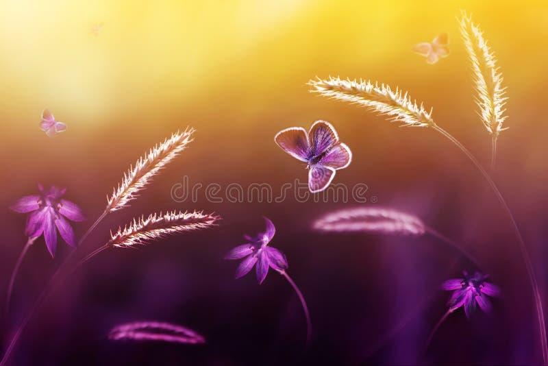 Vlinders tijdens de vlucht tegen een achtergrond van wilde bloemen in purpere en gele tonen Artistiek beeld Zachte nadruk stock afbeelding