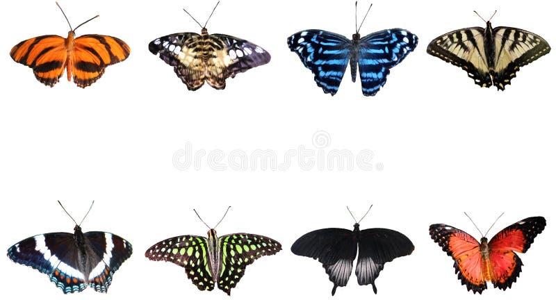 Vlindersinzameling op witte achtergrond royalty-vrije stock foto