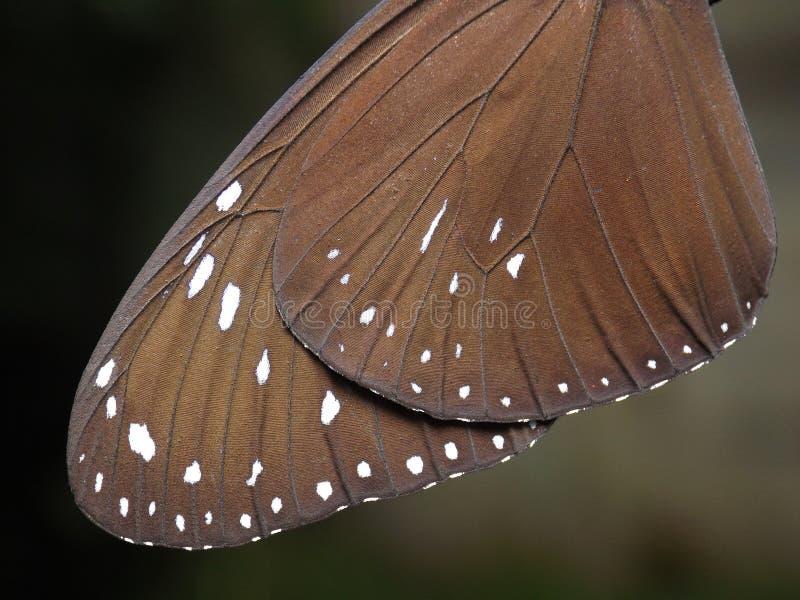 Vlindervleugels stock afbeelding