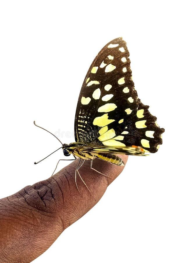 Vlinderzitting op de vinger royalty-vrije stock foto