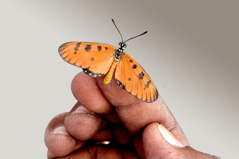 Vlinderzitting op de vinger royalty-vrije stock afbeeldingen