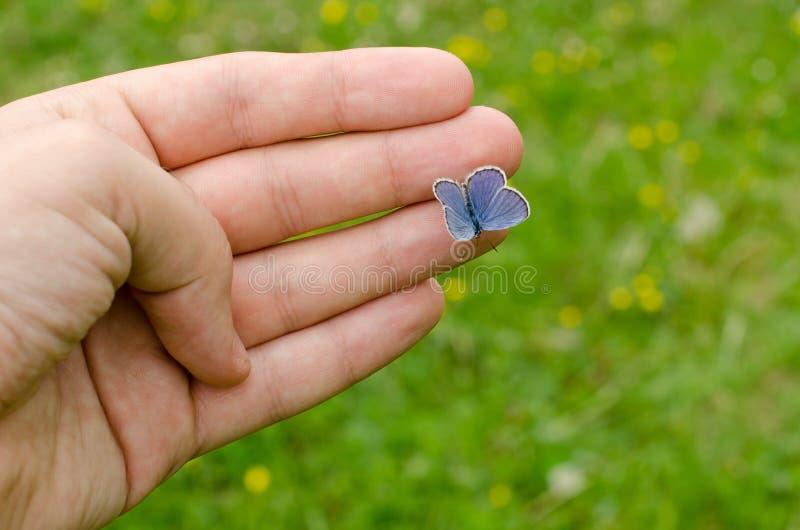 Vlinderzitting op de vinger royalty-vrije stock afbeelding