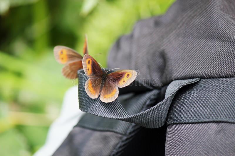 Vlinderzitting op een rugzak stock afbeelding