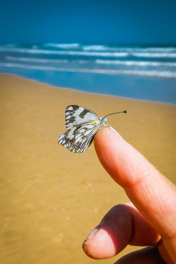 Vlinderzitting op Vinger stock foto's