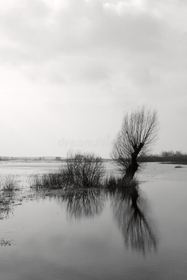 Vloed op zwart-witte weide - royalty-vrije stock afbeeldingen