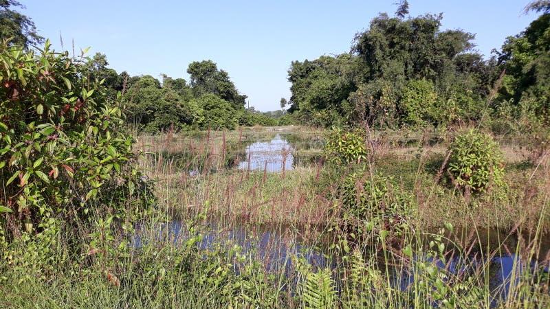 Vloedwater rond het dorp royalty-vrije stock foto's