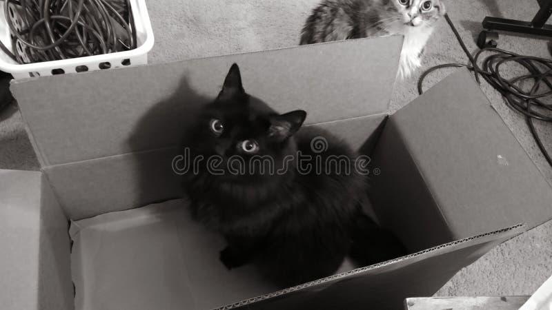 Vloeiende zwarte kat in een doos stock foto's