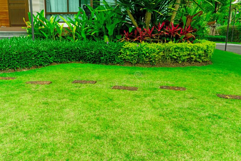 Vlot vers groen grasgazon met willekeurige patroongang van bruine laterite springplank in een tuin van bloeiende installatie stock foto
