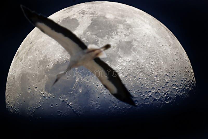 Vlucht aan de maan