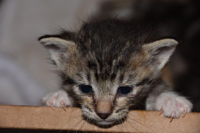 Vlucht van de Doos; Met de fles grootgebrachte Kitten Angst in het Voeden tijd royalty-vrije stock fotografie