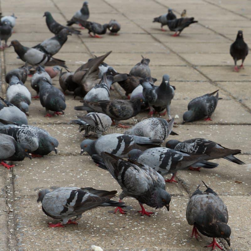 Vlucht van duifvogels stock foto