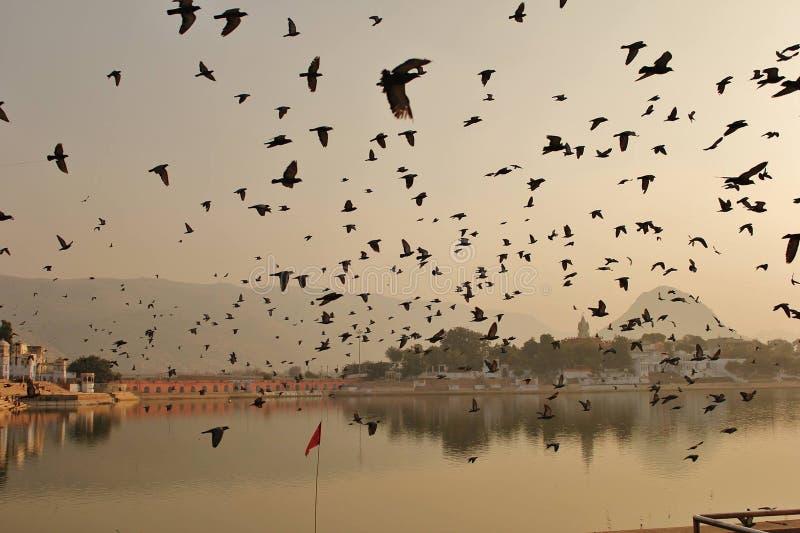 Vlucht van vogels royalty-vrije stock fotografie
