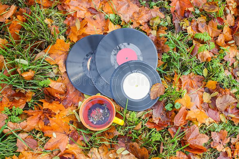 Vntage vinyl records and ceramic cup of tea on fall leaves. Acoustic, aesculus, autumn, autumnal, boards, botanical, botany, brown, chestnut, classic, disc stock images