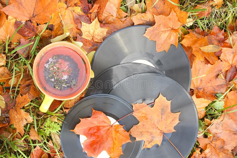 Vntage vinyl records and ceramic cup of tea on fall leaves. Acoustic, aesculus, autumn, autumnal, boards, botanical, botany, brown, chestnut, classic, disc royalty free stock photos