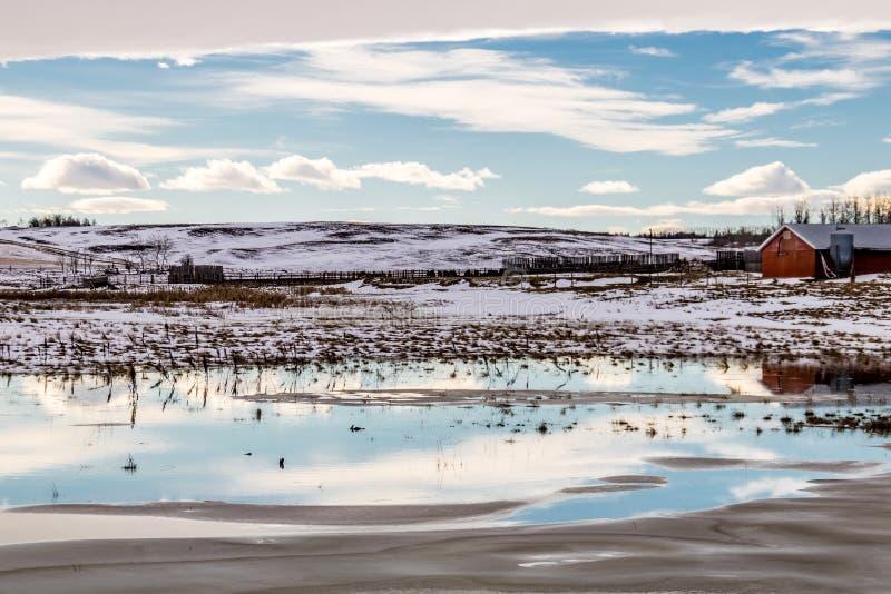 Voûte chinook au-dessus du champ, comté de Stettler, Alberta, Canada photographie stock