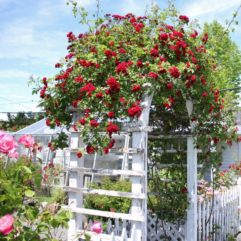 Voûte de Rose photos stock