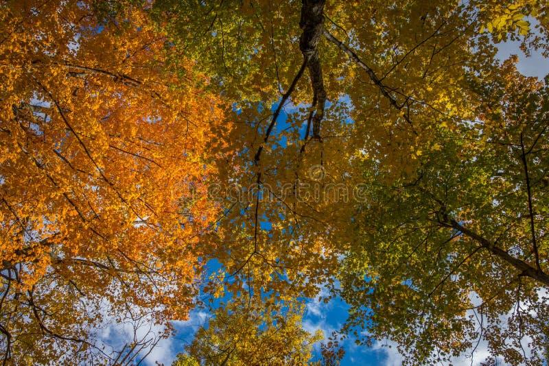 Voûte en automne au Canada oriental photographie stock libre de droits
