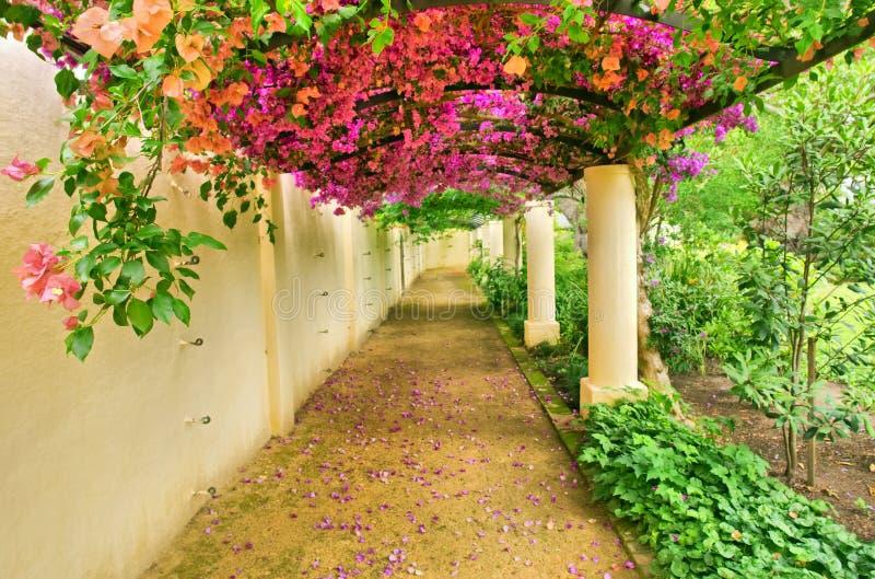 Voûte automnale couverte par les fleurs roses photos libres de droits