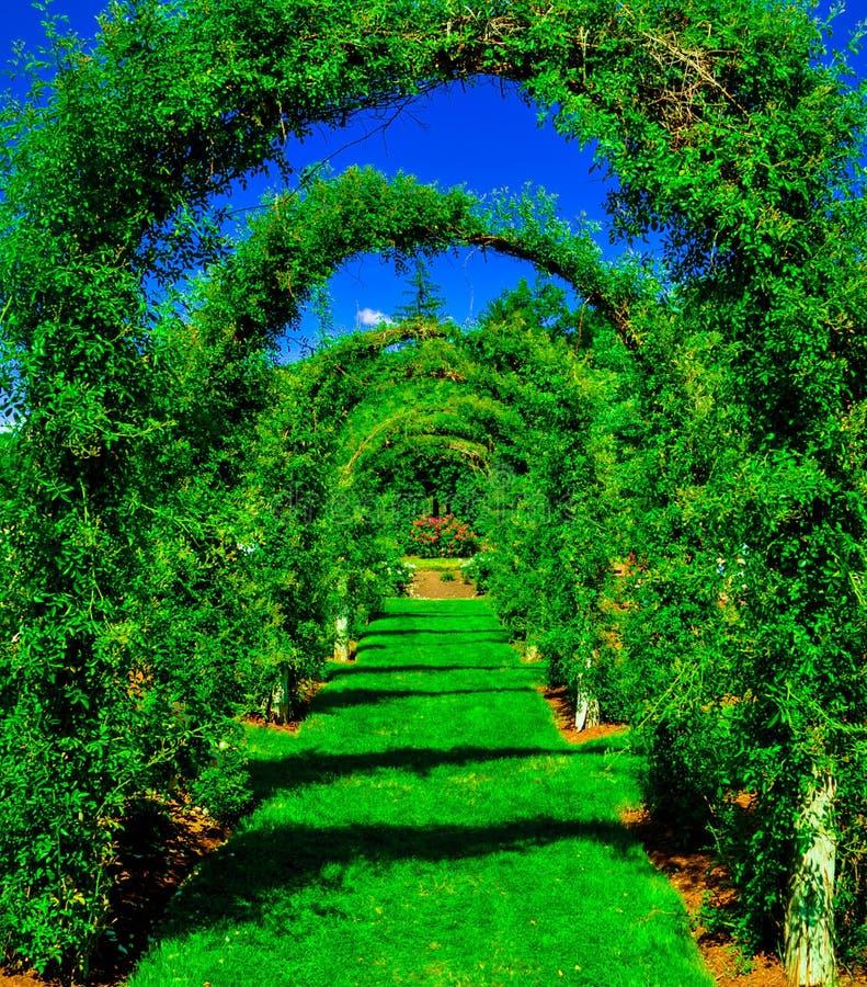 Voûtes d'herbe verte image libre de droits