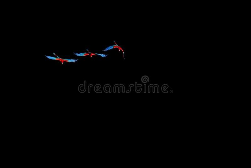 Voando araras, Ara Chloropterus vermelhas e verdes, Buraco DAS Araras, perto de Jardim e de bonito, Pantanal, Mato Grosso do Sul fotos de stock royalty free