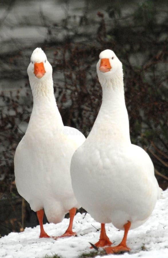 Você está olhando meu pássaro? fotos de stock royalty free