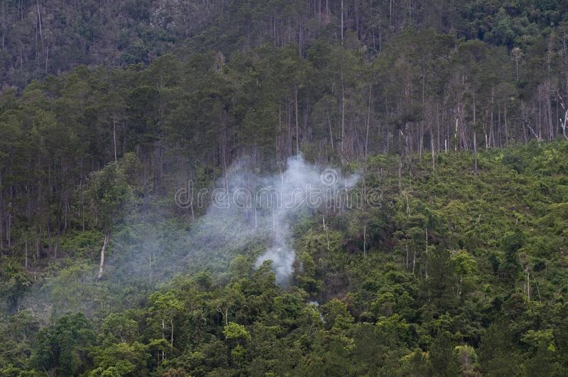 Vochtig bos met rook royalty-vrije stock afbeeldingen