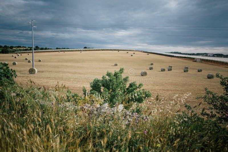 Vodden van hooi op het gebied in Apulia Italië stock afbeeldingen
