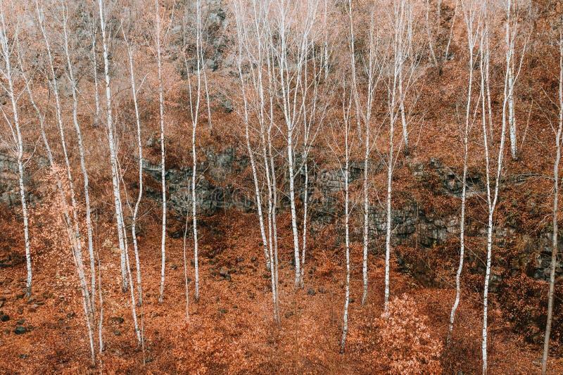 Voderady Beechwood i Tjeckien arkivfoton