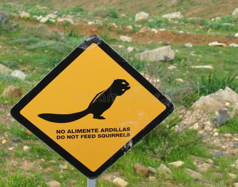 Voed geen eekhoorns stock foto