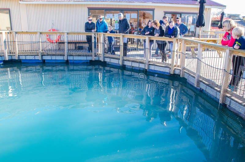 Voed kostenloos de vissen of koop verse zalm om bij zalm kweken van vis in Zuideneiland, Nieuw Zeeland weg te halen royalty-vrije stock foto