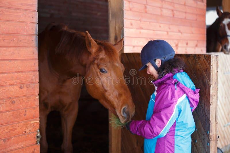 Voedend paard in stal royalty-vrije stock foto