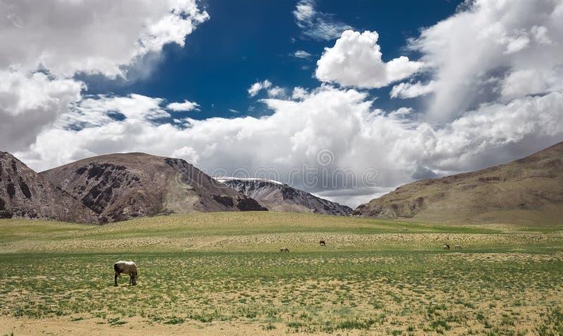 Voedende paarden in Himalayan-Vallei stock fotografie