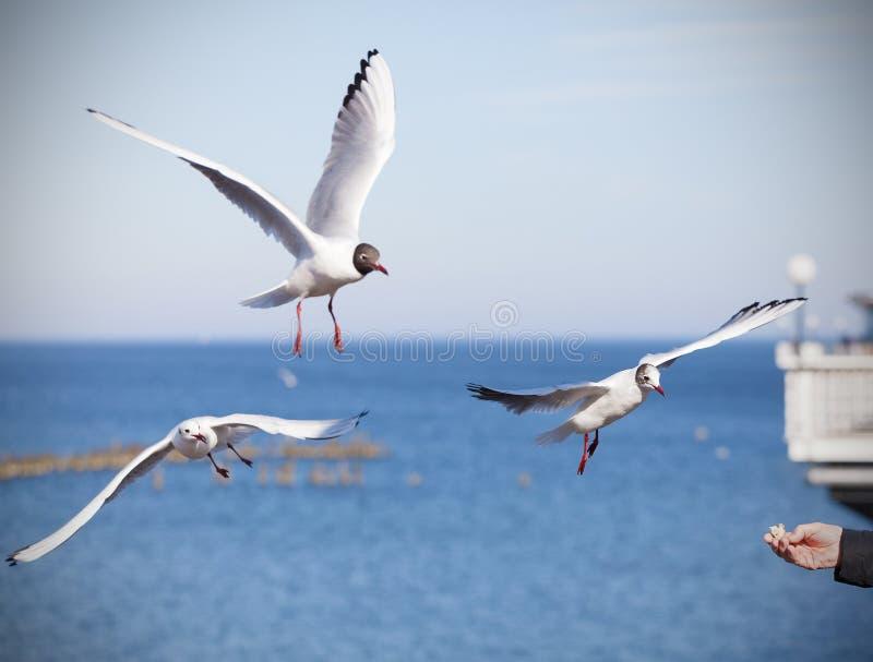 Voedende vogels, hand met stuk van brood royalty-vrije stock foto's