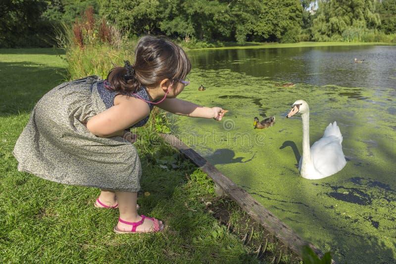 Voedende zwanen en eenden