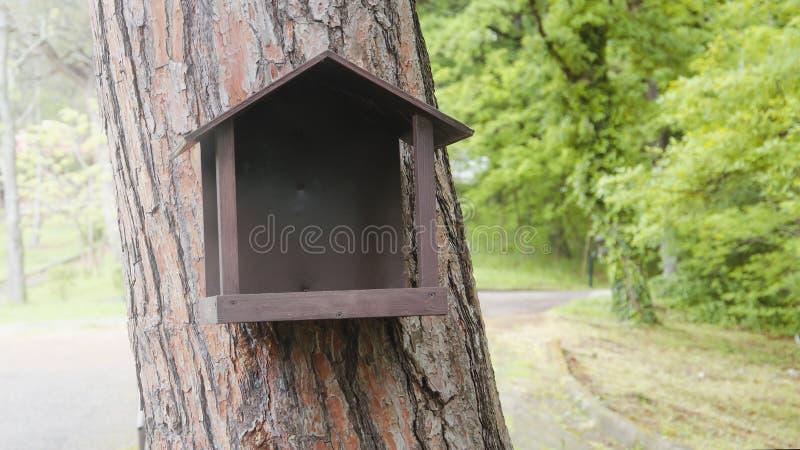 Voeder voor eekhoorns stock afbeeldingen
