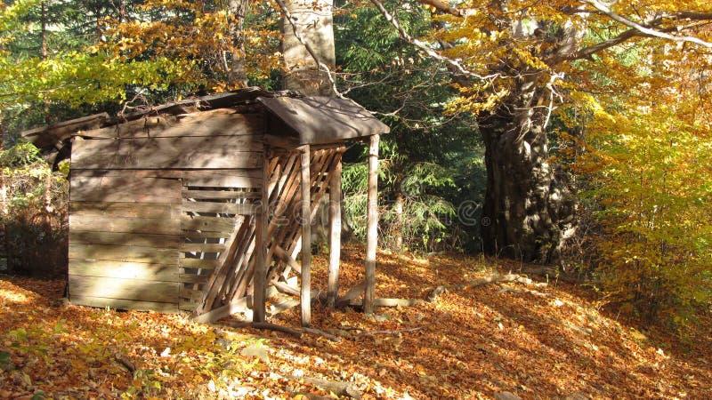 Voederbak in het bos stock fotografie