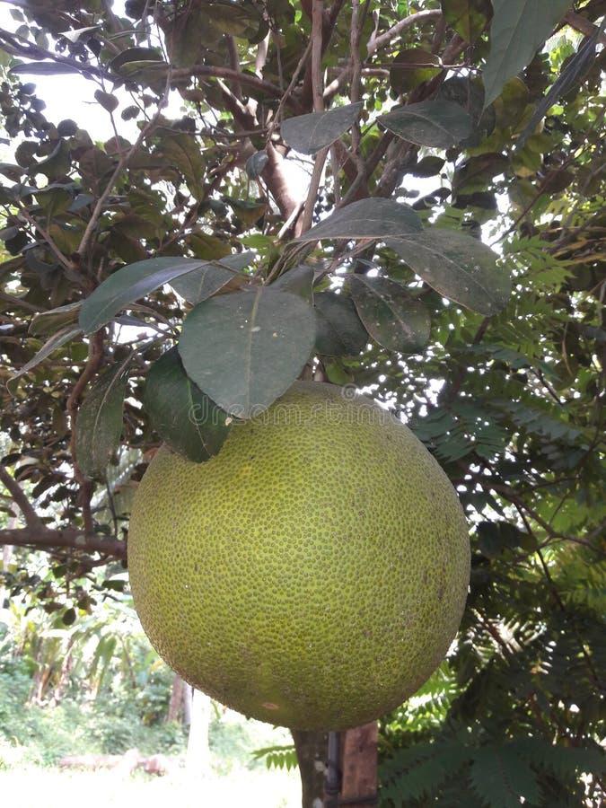 Voedsel Sri Lamnka royalty-vrije stock afbeelding