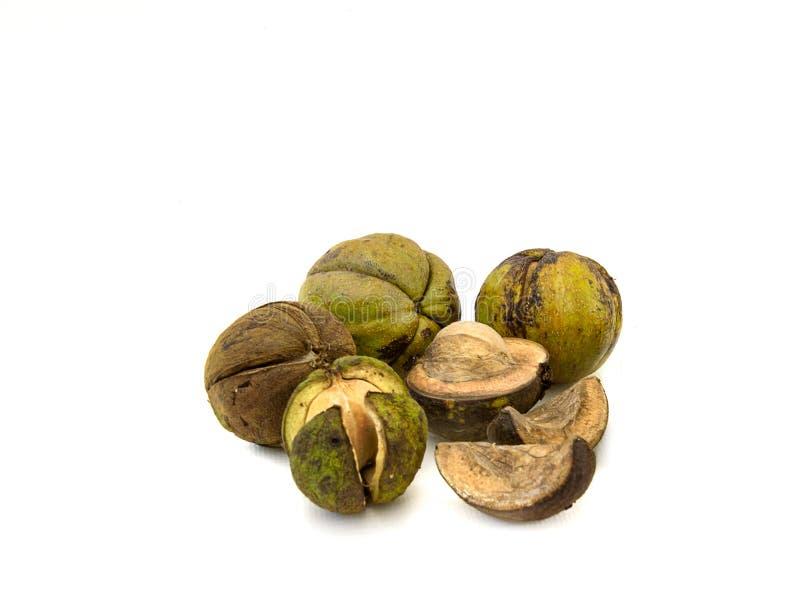 Voedsel van de wildernis De noten van de Shagbarkhickory op wit royalty-vrije stock foto's