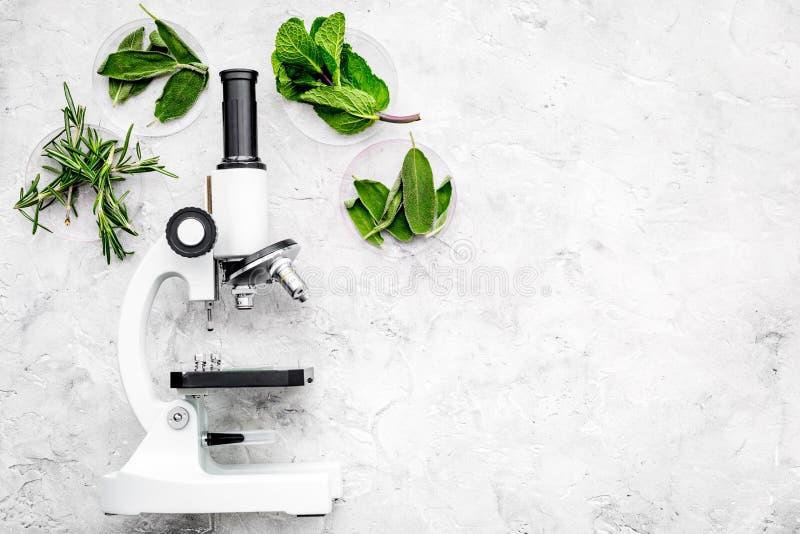 Voedselanalyse Pesticiden vrije groenten Kruidenrozemarijn, munt dichtbij microscoop op de grijze ruimte van het achtergrond hoog stock fotografie