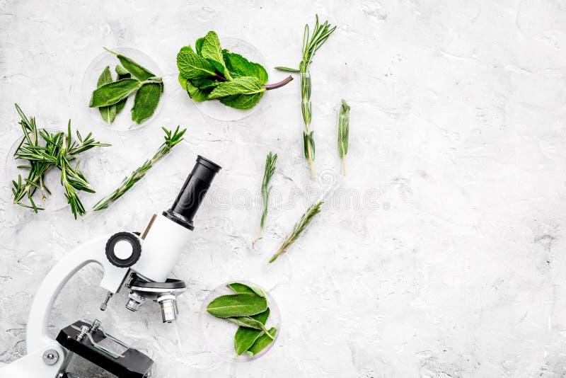Voedselanalyse Pesticiden vrije groenten Kruidenrozemarijn, munt dichtbij microscoop op de grijze ruimte van het achtergrond hoog stock afbeelding