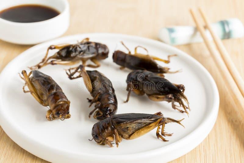 Voedselinsecten: Gebraden veenmolleninsect knapperig voor het eten aangezien de voedselpunten goede hoge bron van maaltijd - eiwi stock afbeelding