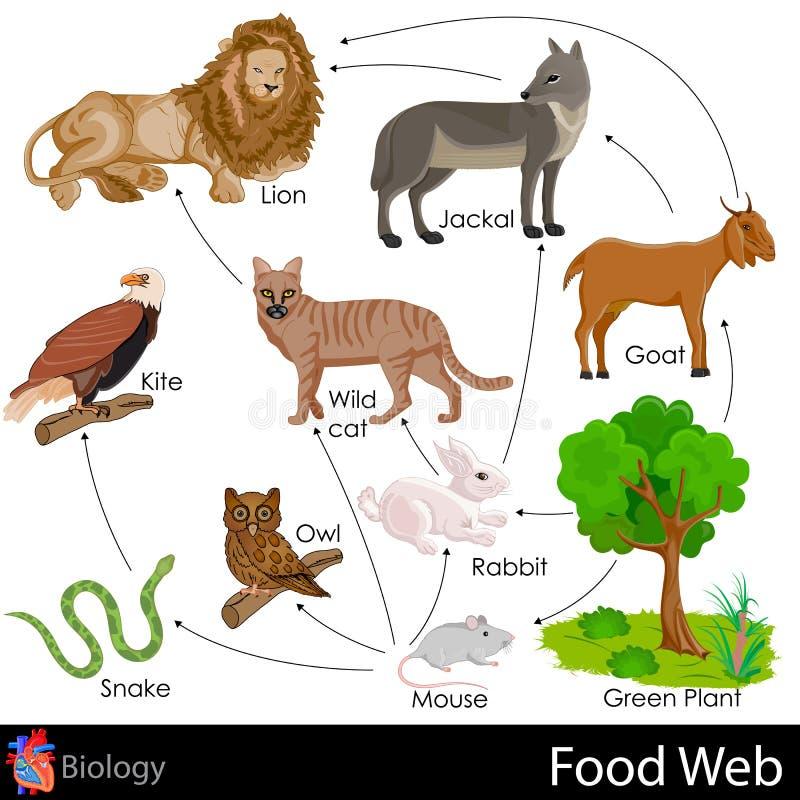 Voedselweb vector illustratie