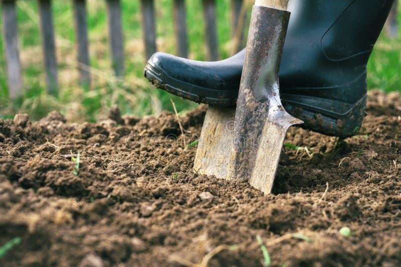 Voet die een rubberlaars dragen die een aarde in de tuin met een oude dicht omhoog spade graven stock foto's