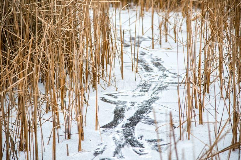 Voetafdruk op bevroren meer stock fotografie