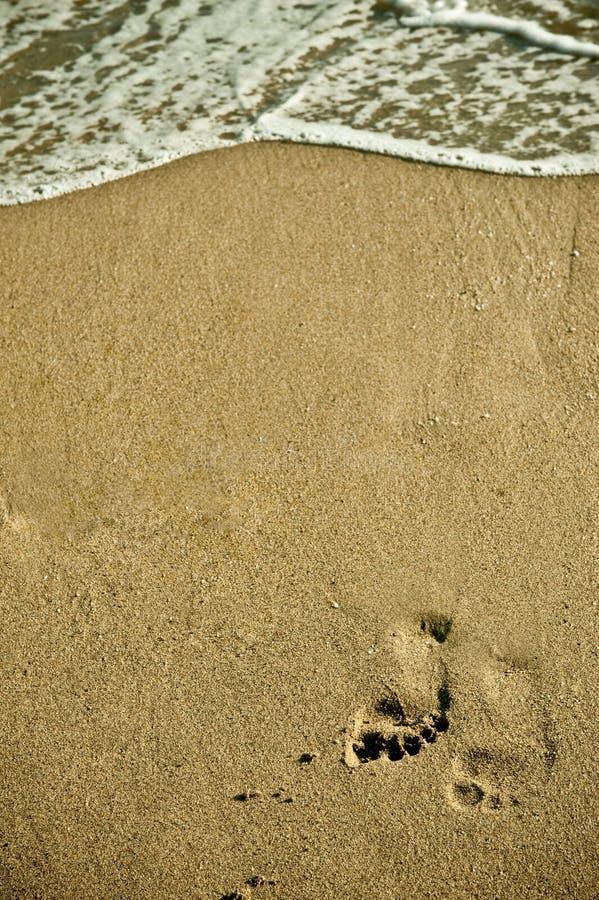 Voetafdruk op strand royalty-vrije stock fotografie