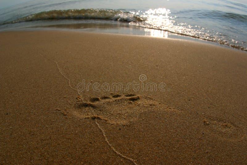 Voetafdruk in zand royalty-vrije stock foto's